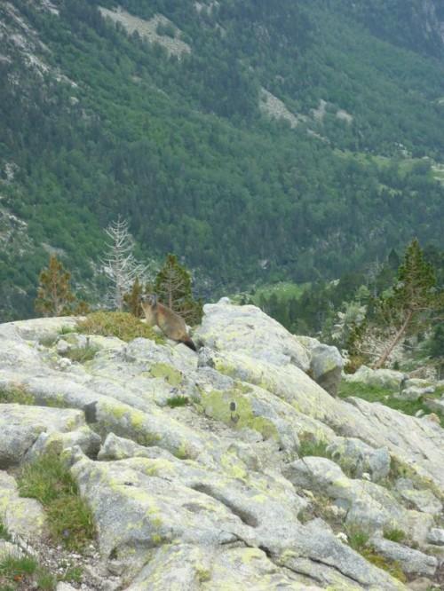 Hike Pyrenees Pico Posets -005