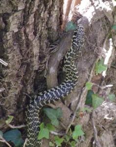 Ian's mystery snake