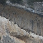 Cliff full of griffon vultures