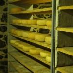 Local sheep cheese