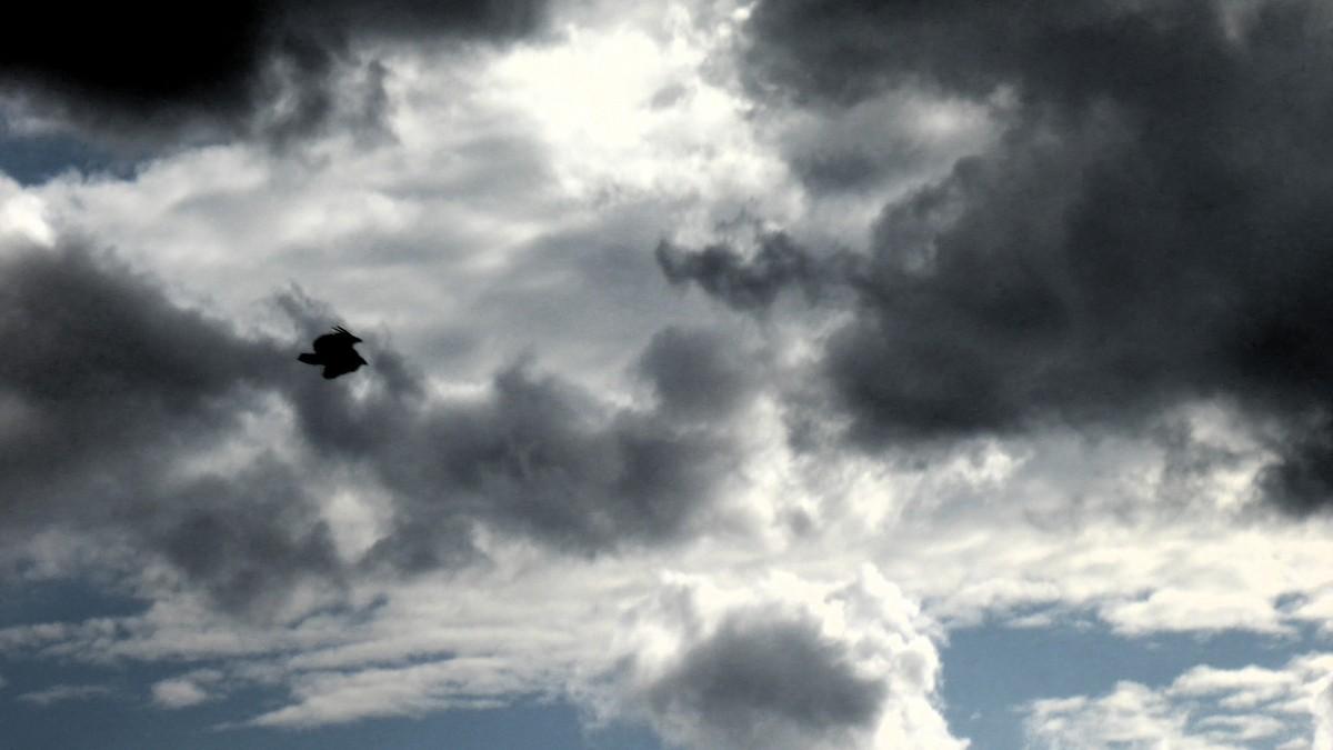 Buitre en el cielo