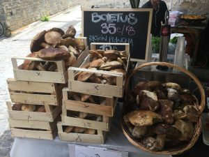 Wild mushrooms in the Pyrenees