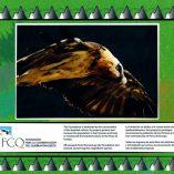 Pyrenees wild fauna book
