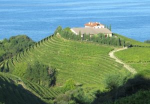 Vineyards on the coast near Getaria