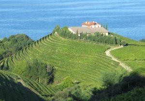 Vineyards on the coast near Getaria