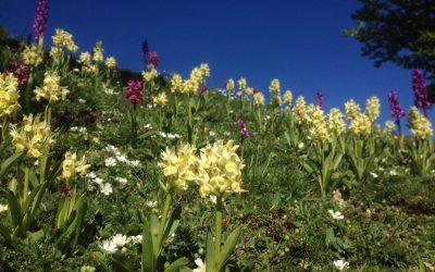 Flowers in the Valle de Salazar