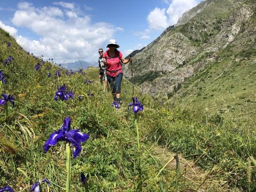 Hiking through Pyrenean Iris
