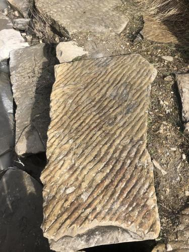 Fossilised ripples in the ancient seabed