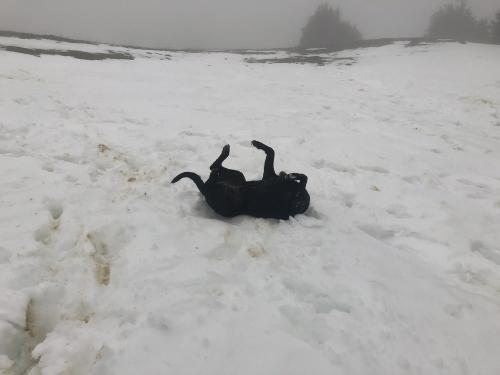 Ruby enjoying the snow on the plateau