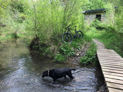 Ruby enjoying a dip