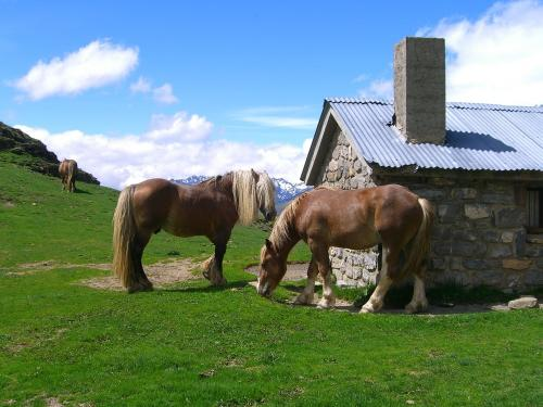Pirenean horses in Ripera Valley - day 3