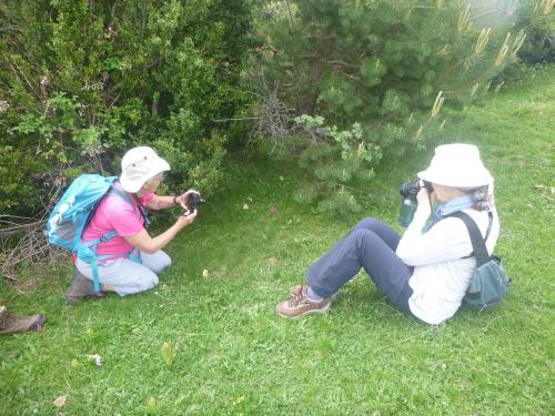 Taking photos of the flowers