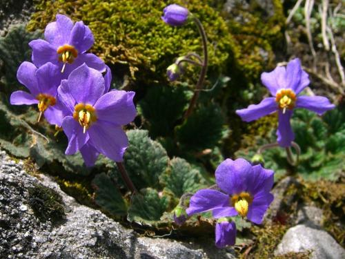 Other Wildflowers