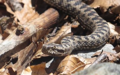 Snakes in the Pyrenees