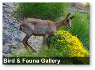 Bird & Fauna Gallery